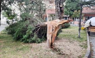 Ağaçlar şiddetli rüzgara dayanamadı