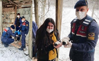 Karda mahsur kalan köpeklerin imdadına jandarma yetişti