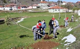 Buldan'da hibe fidanlar toprakla buluşuyor