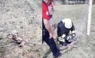 Kale ağlarına takılan afacan kedinin yardımına itfaiye koştu