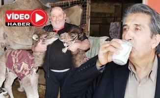 Pandemi deve sütüne talebi artırdı: Litresi 100 TL