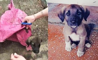 Çuvala konup bağlanan yavru köpeği 2 kadın belediye çalışanı kurtardı