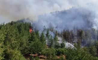 Orman yangını kontrol altına alındı; 5 hektar alan küle döndü