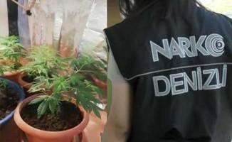 Saksıda uyuşturucu yetiştirmişler