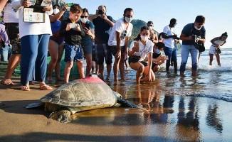 Uydudan izlenen yeşil deniz kaplumbağası 3 günde 30 kilometre yol aldı