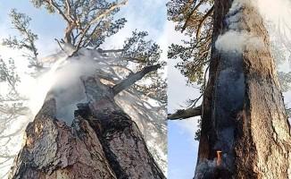 Üzerine yıldırım düşen ağaç 3 gündür yanıyor