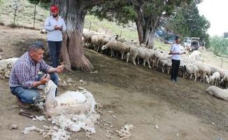Kötekli Yörüklerinin koyun kırkma geleneği şölenle başladı