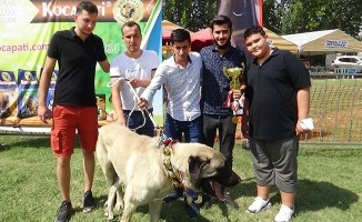 8 asırlık etkinliğin ilk gününde çoban köpekleri boy gösterdi