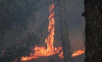 Denizli'de 1 günde çıkan 2. büyük orman yangını geniş bir alanda etkili oluyor