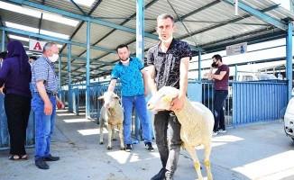 Hayvan yetiştiricilerine damızlık koç dağıtıldı