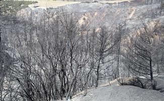 Buldan'da yangının izleri gün ağarınca ortaya çıktı