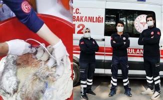 112 personeli masaj ve oksijen tedavisiyle 20 kedinin hayatını kurtardı