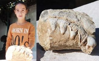 Küçük kızın bulduğu fosil müze tarafından alındı