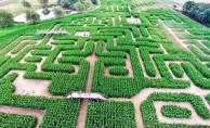 """Tarım ve turizm aynı projede buluştu, """"Mısır Labirenti"""""""