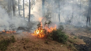 2 noktada çıkan orman yangınında sabotaj şüphesi